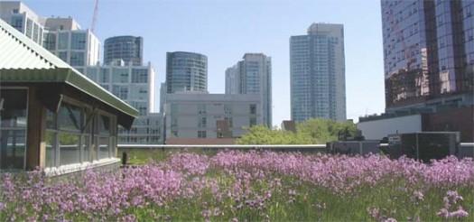 green-roof-garden
